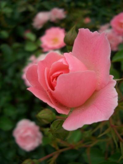 Flower4_3