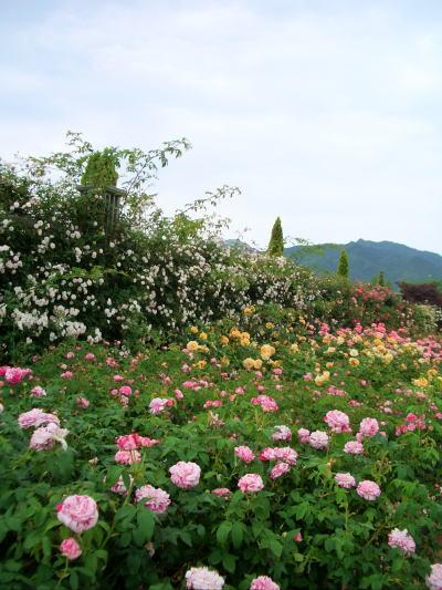 Flower8_4