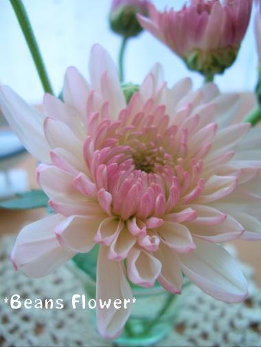 Flower29