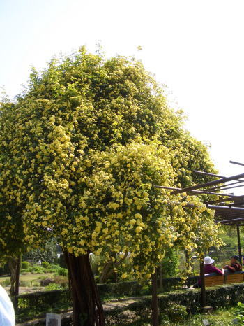 Kimokkou